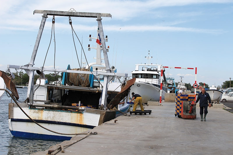 La criée aux poissons des Pays d'Agde